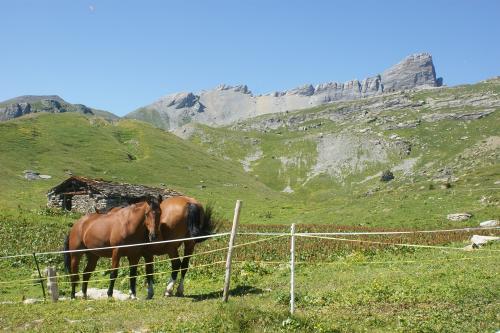 Pferde auf der Alp